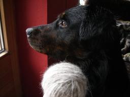 hundewolle.jpg